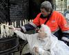 Kevelaer Wallfahrt: Ein Malteser Helfer hilft beim Anzünden der Kerze.