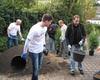 Im Rahmen des Malteser Social Days pflanzten die Mitarbeiter eine Hecke und einen Weinstock auf dem Gelände der Einrichtung. Foto: M. Scheffler